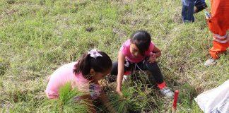 Plantación de ocotes en Ocotlán